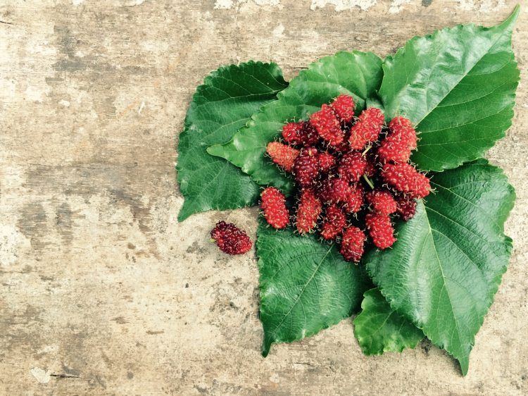 food-fruits-leaves-105393